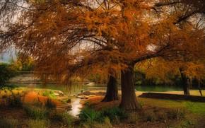 Картинка осень, деревья, Austin, Техас