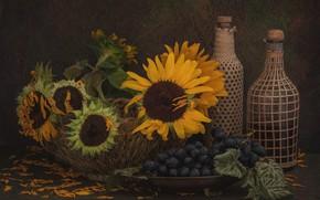 Картинка подсолнухи, цветы, лепестки, виноград, бутылки, натюрморт, корзинка