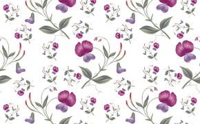 Картинка белый, цветы, фон, Wallpaper, Pattern, Floral, Seamless