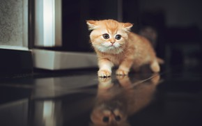 Картинка отражение, малыш, рыжий, котёнок