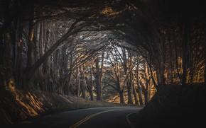 Обои дорога, лес, свет, деревья, закат, Калифорния