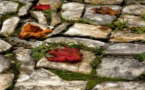 Картинка листья, природа, камни