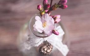 Картинка цветок, вишня, веточка, стол, весна, сакура, натюрморт, бутоны, цветение, композиция, вазочка