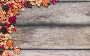 Картинка осень, листья, фон, дерево, colorful, wood, background, autumn, leaves, осенние, maple