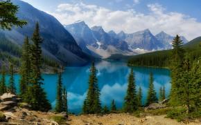 Картинка лес, озеро, берег, ели, Канада, Альберта, водоем, Морейн