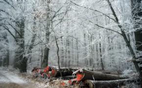 Картинка зима, иней, лес, дрова
