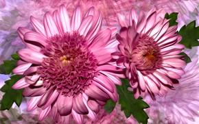 Картинка grafika, kolor, kwiaty