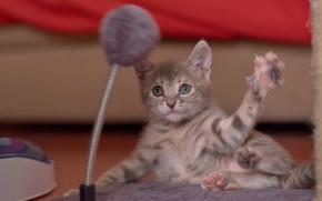 Картинка малыш, мордочка, котёнок, лапка, забава