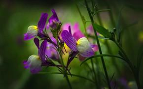 Картинка цветы, весна, фиолетовые