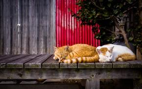 Обои отдых, коты, спят