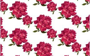 Картинка белый, фон, розы, текстура, бутоны, Roses, background, pattern