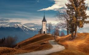 Картинка дорога, деревья, горы, церковь