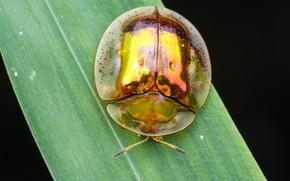 Картинка макро, фон, жук, насекомое, травинка