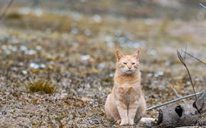 Картинка зима, поле, кошка