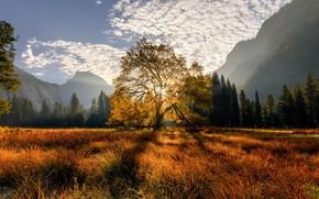 Картинка trees, mountains, tree, meadow, Californiа