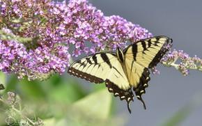 Картинка цветы, бабочка, желтая