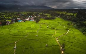 Картинка зелень, деревья, горы, тучи, тропики, поля, дома, долина, Таиланд, Phuket, плантации