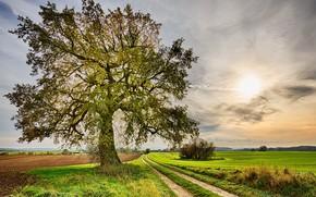 Картинка дорога, поле, небо, фото, дерево, луг