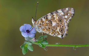 Картинка макро, бабочка, цветочек