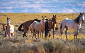 Картинка лошади, табун, horse