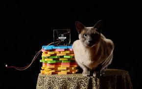Картинка кот, черный фон, кулер, композиция, цветной пластик