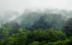 Картинка лес, горы, туман, тропики, камни, скалы, растительность, Лаос