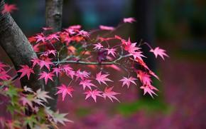Картинка осень, листья, деревья, ветки