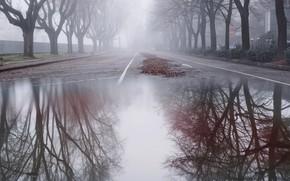 Картинка город, туман, улица, лужа