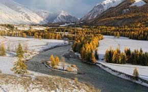 Обои river, trees, winter, snow, stones