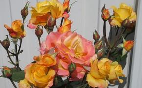Картинка Куст, Розы, Meduzanol ©, Лето 2018, Желто-оранжевые