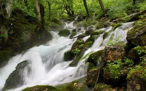 Картинка зелень, лес, река, ручей, камни, бурный поток