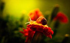 Картинка цветок, макро, свет, красный, зеленый, фон, улитка, лепестки, сад, ракушка, рожки, боке
