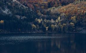 Картинка лес, горы, рябь, склон, водоём