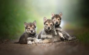 Картинка природа, семья, щенки