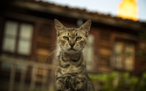 Картинка кошки, cats wallpapers, Bulgaria, cute cat, Nessebar