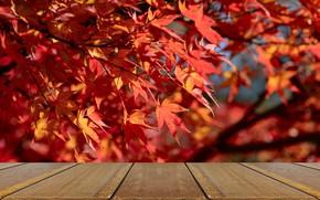 Картинка red, осенние, leaves, листья, дерево, wood, клен, table, background, осень, maple, фон, красные, autumn, доски, ...