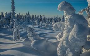 Картинка красота, утро, снег, зима, природа, пейзаж, лес