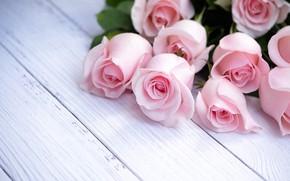 Картинка розы, букет, розовые, pink, roses