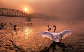 Картинка осень, листья, солнце, свет, закат, птицы, мост, туман, река, розовый, рассвет, птица, крылья, стая, вечер, …