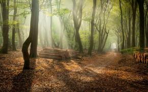 Картинка лес, утро, дрова