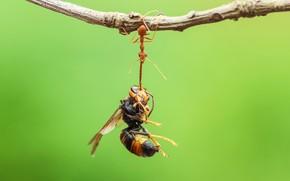 Картинка веточка, оса, муравей
