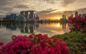 Картинка цветы, город, Сингапур, Singapore