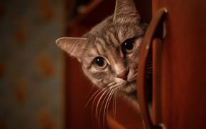 Картинка кошка, взгляд, мордочка, Владимир Васильев