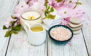 Картинка цветы, камни, масло, ветка, сакура, спа, соль, Olena Rudo