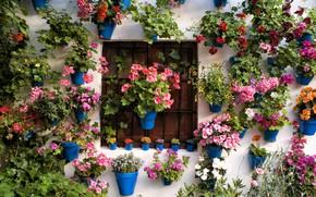 Картинка листья, цветы, решетка, Стена, окно, горшки