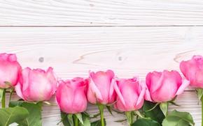 Картинка белый, фон, розы, букет, бутоны