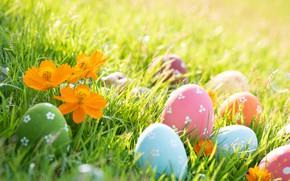 Картинка трава, цветы, весна, colorful, Пасха, grass, happy, flowers, spring, Easter, eggs, крашеные яйца