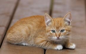 Картинка котенок, рыжий, лежит