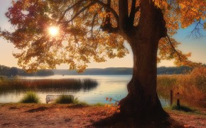 Картинка осень, озеро, парк, дерево, Германия, камыш, Germany, Бранденбург, Brandenburg, Озеро Шермютцель, Schermützelsee, Märkische Schweiz Nature …