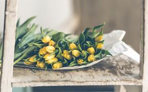 Картинка цветы, весна, тюльпаны, бутоны